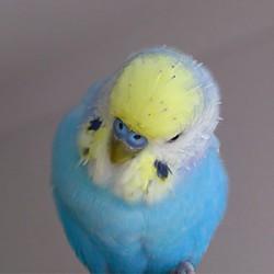 鳥フォトコンテスト「きむ」さん