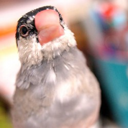 鳥フォトコンテスト「ステラ」さん