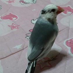 鳥フォトコンテスト「ハッちゃん」さん