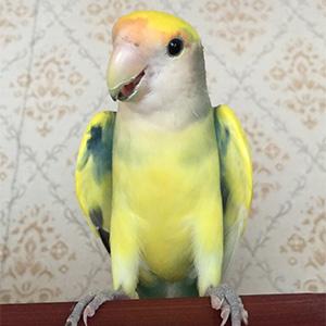 鳥フォトコンテスト「ふくちゃん」さん