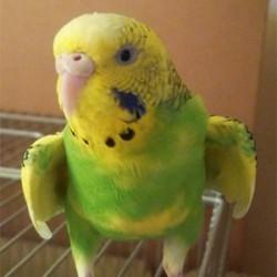 鳥フォトコンテスト「ひなた」さん
