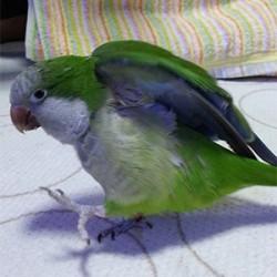 鳥フォトコンテスト「オリーブ」さん