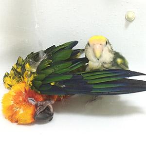 鳥フォトコンテスト「ポコ・ペコ」さん