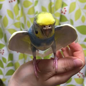 鳥フォトコンテスト「カレーちび」さん