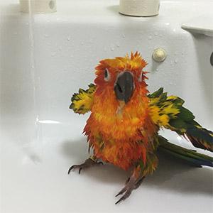 鳥フォトコンテスト「ポコ」さん