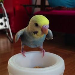 鳥フォトコンテスト「ちくわちゃん」さん