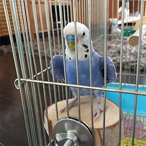 鳥フォトコンテスト「ハッチ」さん