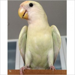 鳥フォトコンテスト「collon」さん