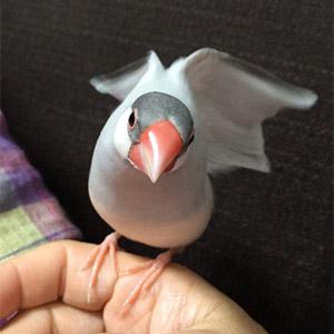 鳥フォトコンテスト「ネル」さん