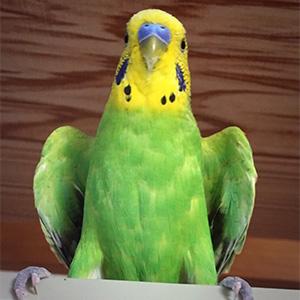鳥フォトコンテスト「たらチャン」さん