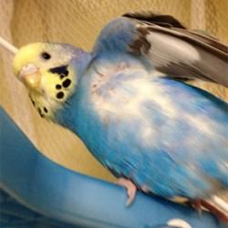 鳥フォトコンテスト「ぴっぴ」さん