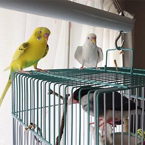 鳥フォトコンテスト「タンタン・ミルク」さん