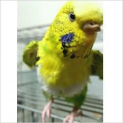 鳥フォトコンテスト「メッキ」さん