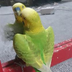 鳥フォトコンテスト「まるちゃん」さん