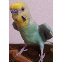 鳥フォトコンテスト「ぎゅー」さん