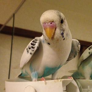 鳥フォトコンテスト「ミルク」さん