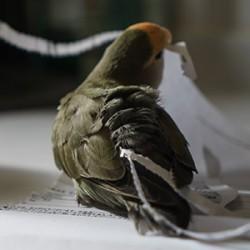 鳥フォトコンテスト「ちゃこ」さん