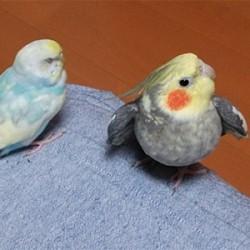 鳥フォトコンテスト「ぴち」さん