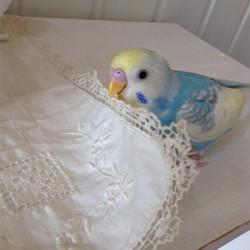 鳥フォトコンテスト「バニラ」さん