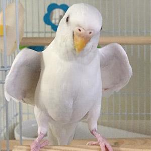 鳥フォトコンテスト「あるちゃん」さん