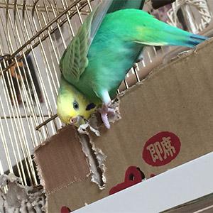 鳥フォトコンテスト「てばちゃん」さん