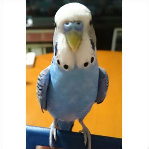 鳥フォトコンテスト「おーちゃん」さん