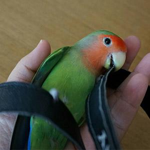 鳥フォトコンテスト「ねむ(ネムチ)」さん
