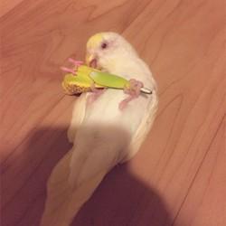 鳥フォトコンテスト「ルーちゃん」さん