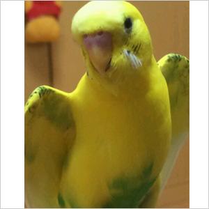 鳥フォトコンテスト「ぴーこ」さん