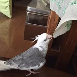 鳥フォトコンテスト「ウィズ」さん