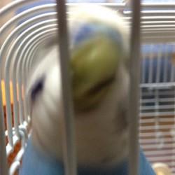 鳥フォトコンテスト「Putin」さん