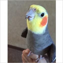 鳥フォトコンテスト「ぽてち」さん