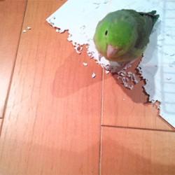 鳥フォトコンテスト「るる」さん