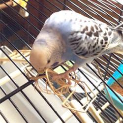 鳥フォトコンテスト「アビー」さん