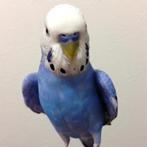 鳥フォトコンテスト「ぷったん」さん