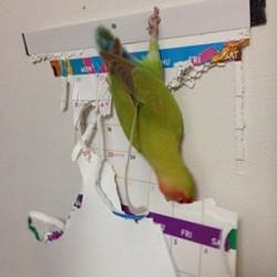 鳥フォトコンテスト「プーちゃん」さん