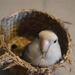 鳥フォトコンテスト「ネム」さん