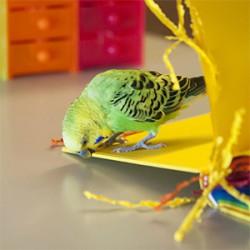 鳥フォトコンテスト「ちぃちゃん」さん