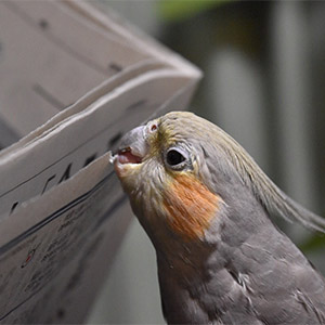 鳥フォトコンテスト「くまお」さん