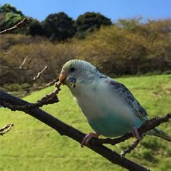 鳥フォトコンテスト「そら」さん