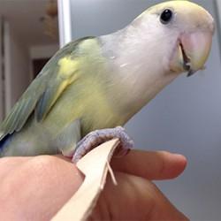 鳥フォトコンテスト「なぎ」さん