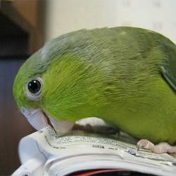 鳥フォトコンテスト「ウメ」さん