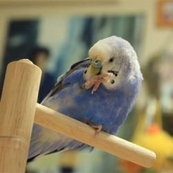 鳥フォトコンテスト「じゅじゅ」さん