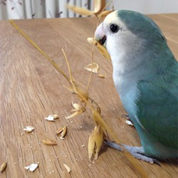 鳥フォトコンテスト「うた」さん