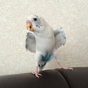 鳥フォトコンテスト「こまち」さん