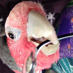鳥フォトコンテスト「桃子」さん