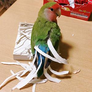 鳥フォトコンテスト「キノ」さん