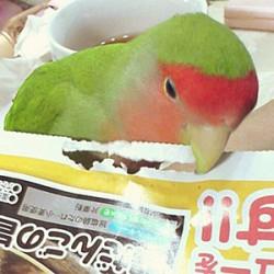 鳥フォトコンテスト「にっち」さん