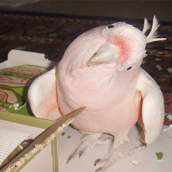鳥フォトコンテスト「くるみ」さん