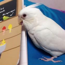 鳥フォトコンテスト「Riche」さん
